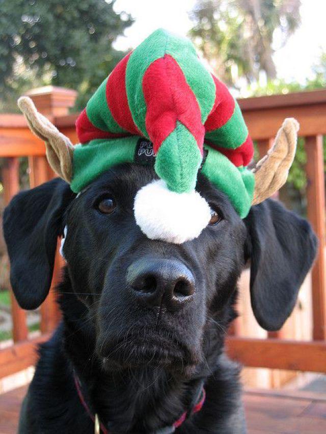 Imagenes de perros negros navideños para colocar en el celular