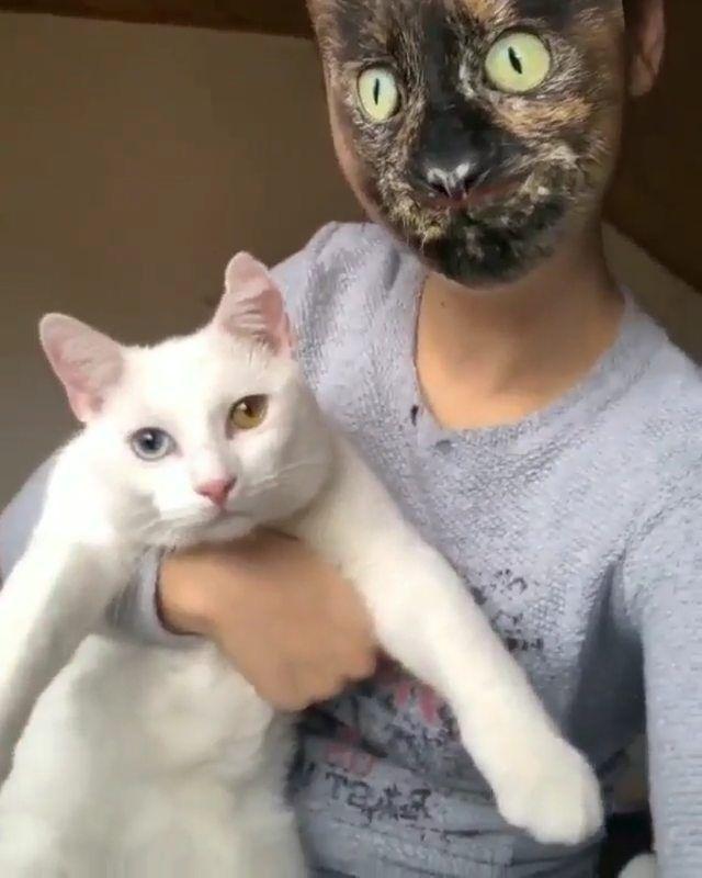 Pleasant Cats On Instagram Aryasnow Cats Tiktok Pleasantcats In 2020 Animal Pictures Animals Beautiful Animals