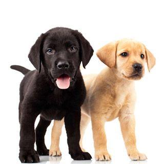 Dog 101   Training & Behaviors   Puppy Training Tips   Nylabone®