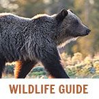 The kind of bear spray you use matters | Yellowstone National Park