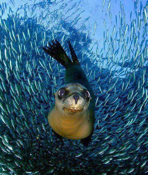 9 best images about Swimming with seals in Australia. on ...