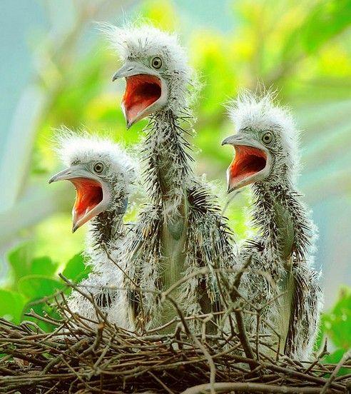 Babies #Bird