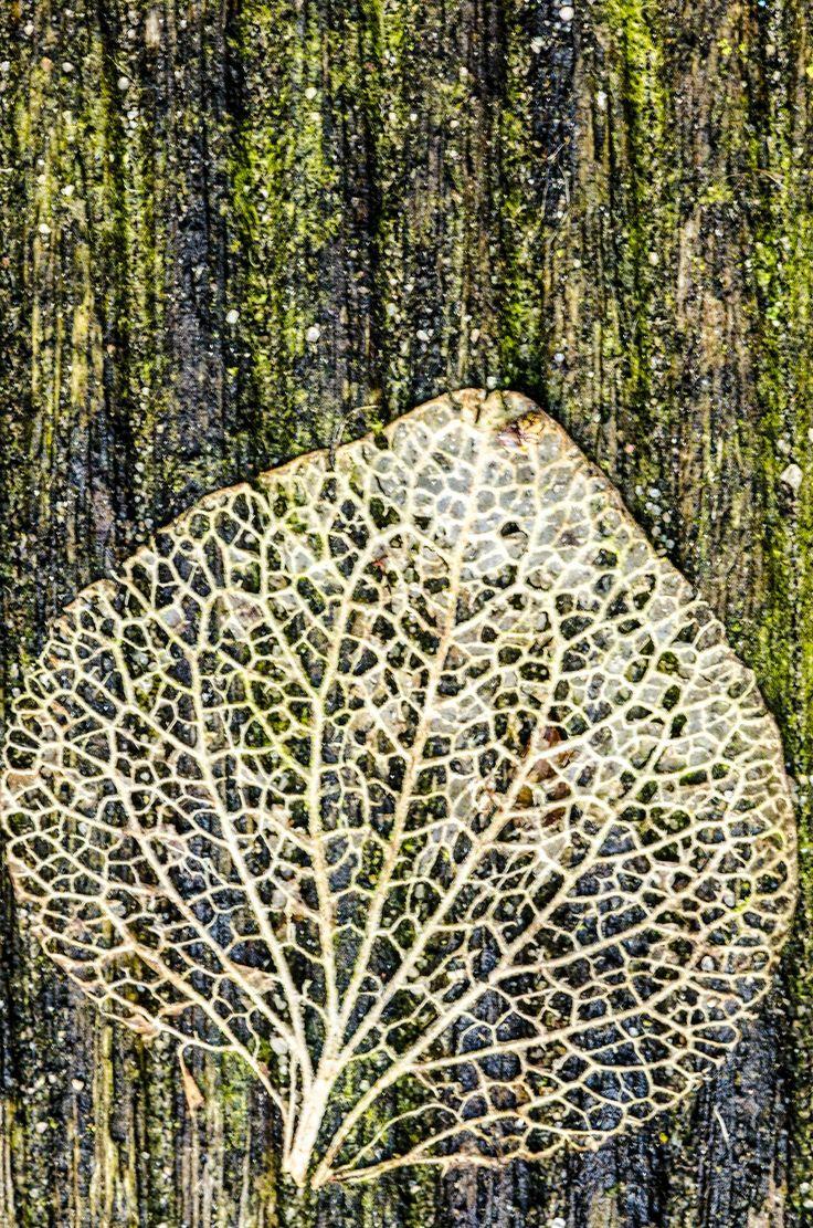 Condoleance- en aandachtskaart met blad groen van fotograaf Hans Lunenburg