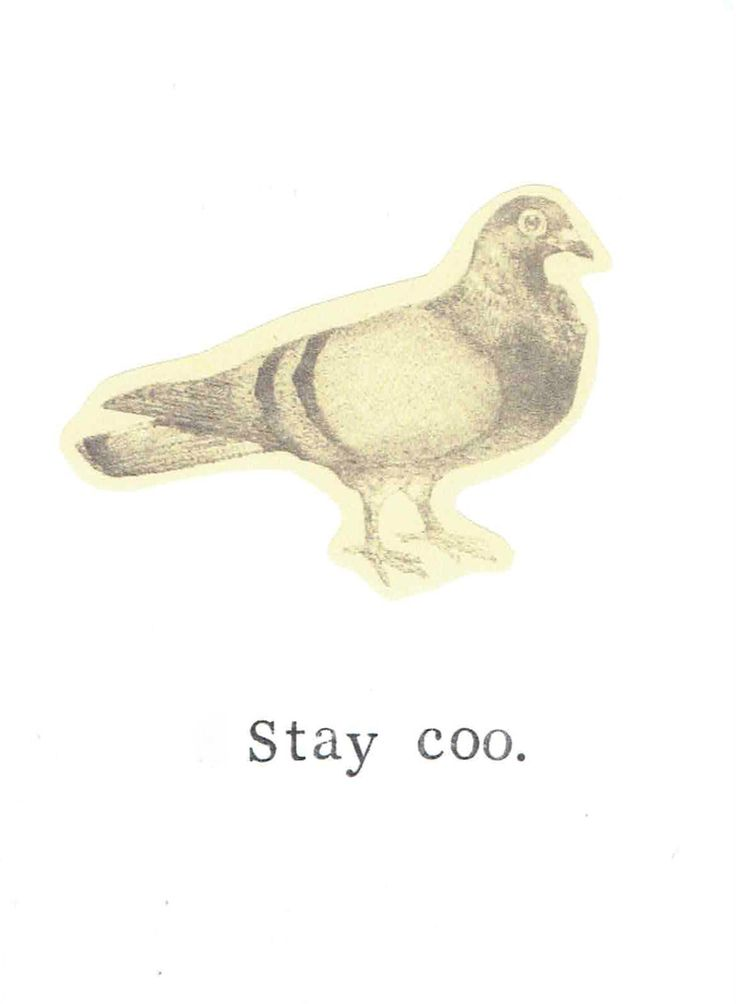 Stay Coo Pigeon Card | Funny Bird Pun Humor Nerdy Nature Birthday Card Thank You Hipster Animals Men Women For Him For Her by ModDessert on Etsy https://www.etsy.com/listing/242826852/stay-coo-pigeon-card-funny-bird-pun