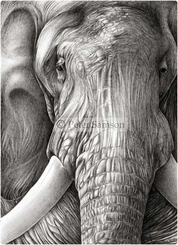 Snappy Pixels Realistic Pencil Drawings of Animals (22 Pictures ...
