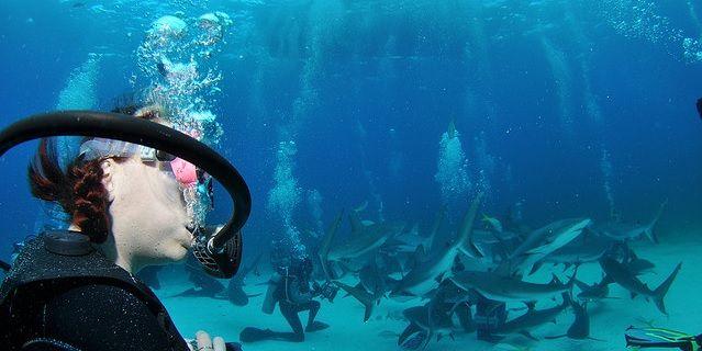 Africa,cape town,Danger,kitesurfing,ocean sports,Risk,Safety,Scuba Diving,shark,shark dive,shark diving,sharks,south africa,Surf,Surfing,water sports,watersports