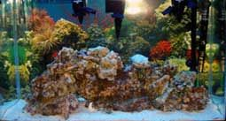 Start a very large saltwater aquarium