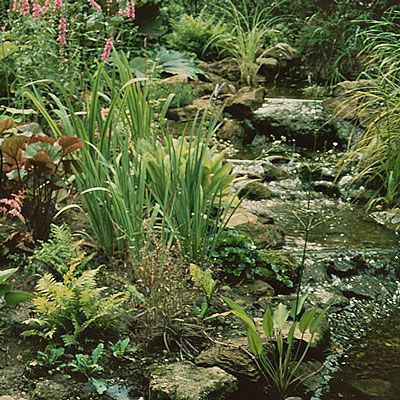 32 best images about plants for boggy gardens on pinterest for Plants around ponds