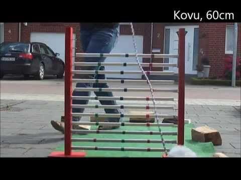 Kaninhop am 06.08.2012 - Hochsprung - YouTube