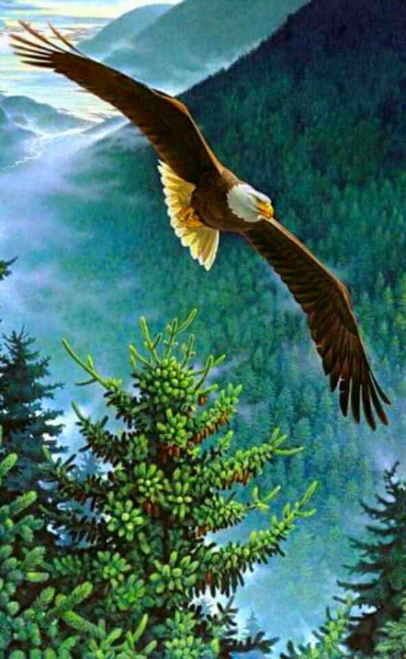 Αποτέλεσμα εικόνας για eagle flying
