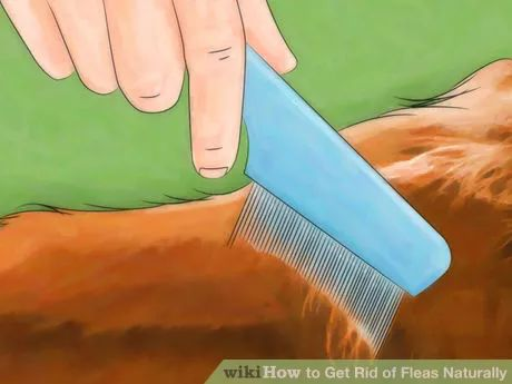 Image titled Get Rid of Fleas Naturally Step 7