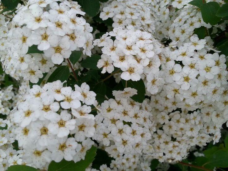 Flowerd