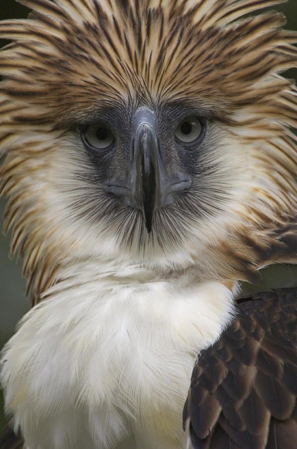 ~~The Depth and Narrowness by Klaus Nigge - Philippine Eagle~~