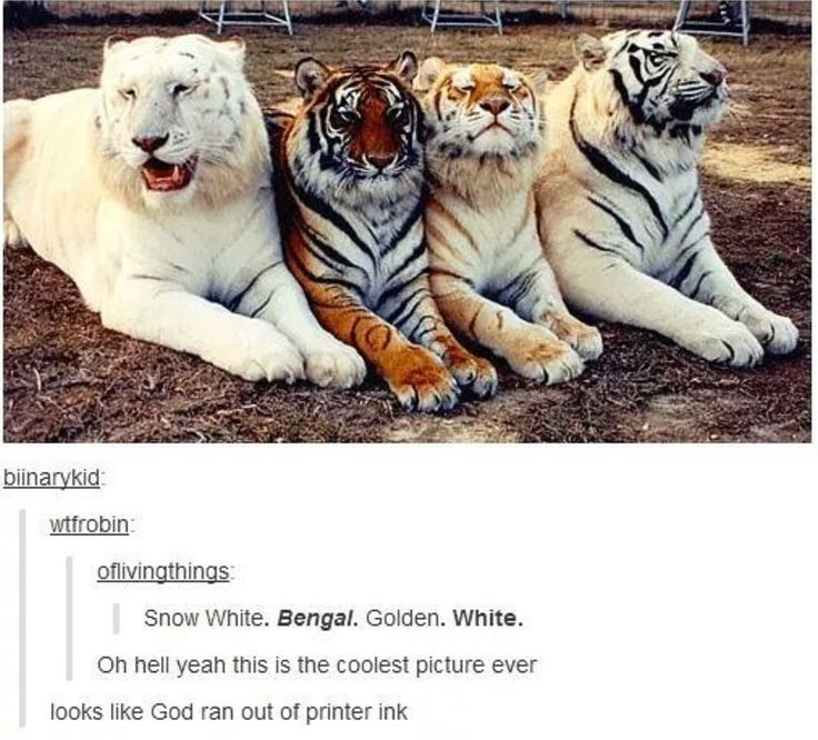 "The golden one looks so proud like ""heck yeah I'm golden look at me"""