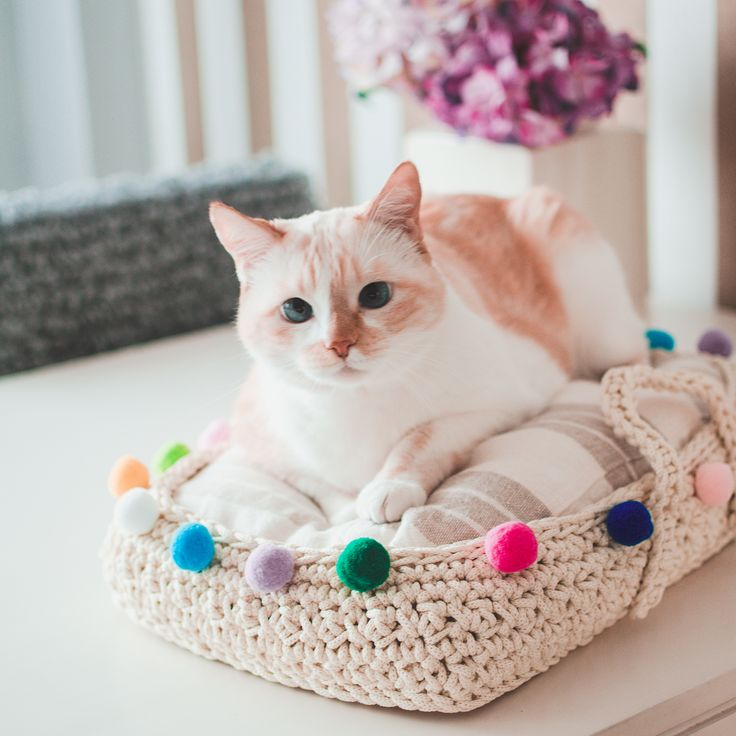 Misho's Pet Bed by Mua Carmen