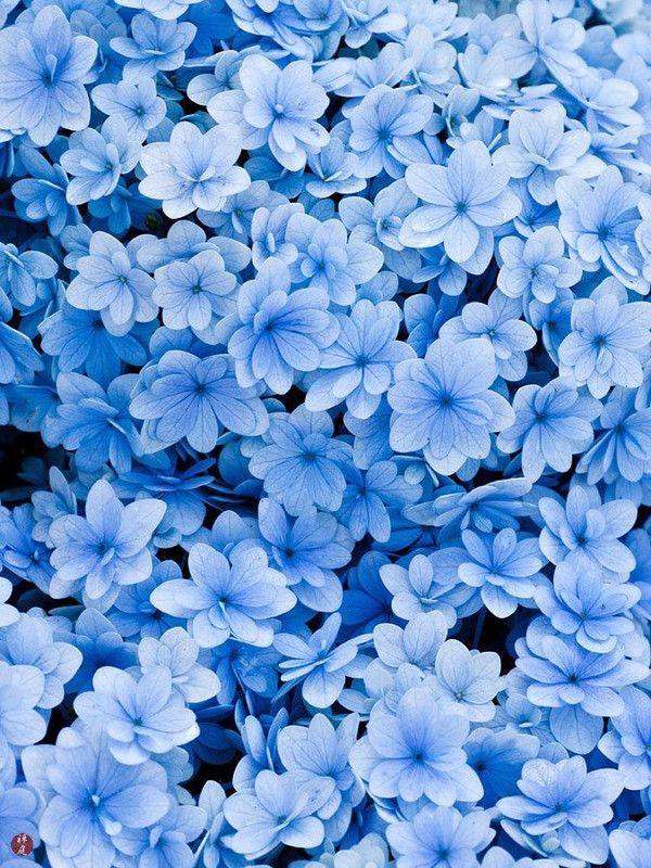 красивая картинка с синими цветами белый кролик
