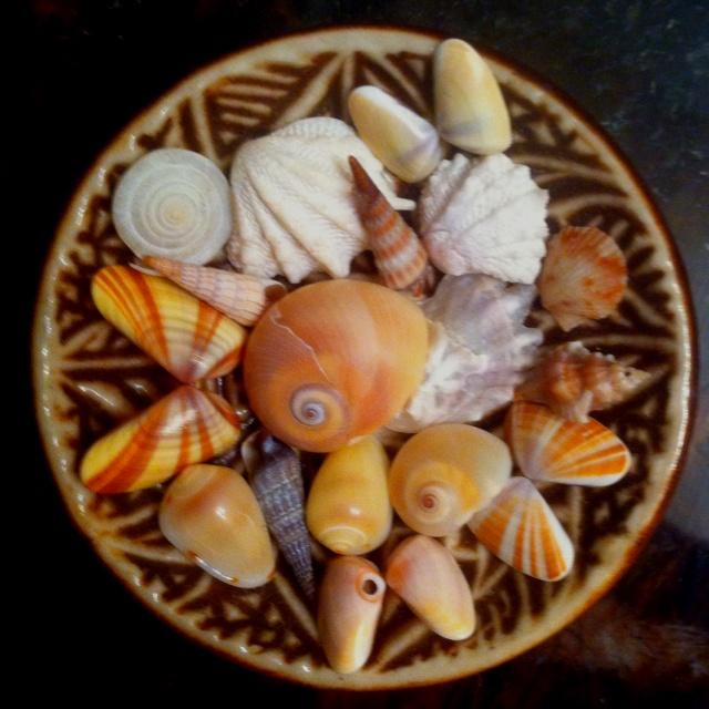 teeny bowl with teeny shells: Seaside, Seashells
