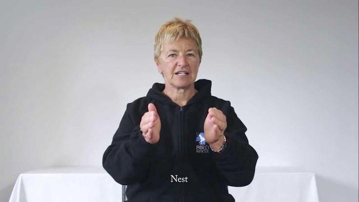 Sign Language Week: Day-4 (Thursday)