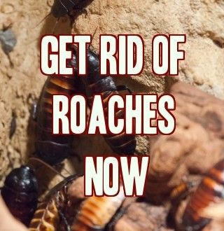10 best ways to get rid of cockroaches roaches 10 is the best use it in combination with. Black Bedroom Furniture Sets. Home Design Ideas