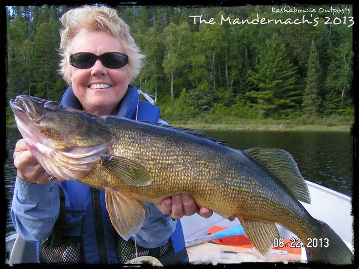 43 best images about walleye on pinterest canada lake for Walleye fishing in canada