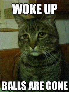 21 Hilarious Cat Me  21 Hilarious Cat Memes That Never Fail to Make Us LOL