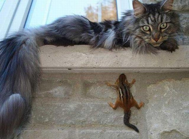 Ethan HuntFunny Kitty, Squirrels, Funny Cat, Maine Coon, Chipmunks, Funny Photos, Funny Animal, Ninjas, Animal Funny