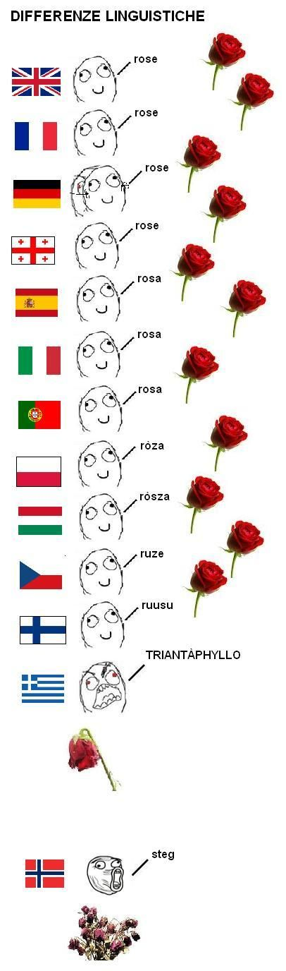 Differenze linguistiche / Rose