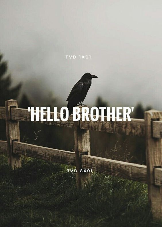 'HELLO BROTHER' — The Vampire Diaries #TVD