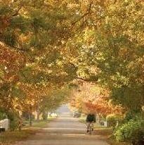 Greyton's leavy back roads....