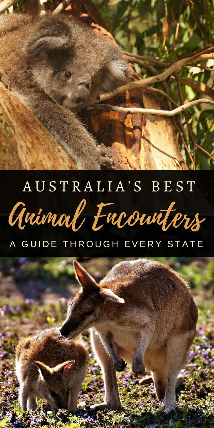 Australian Animal Encounters   Comprehensive guide by every state on where to meet native Australian animals - sanctuaries, zoos and in the wild   Our Globetrotters - Adventurous Family Travel Blog