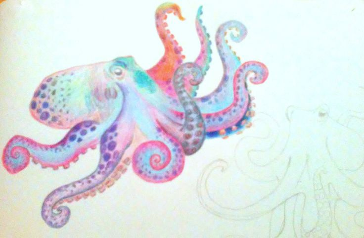 Octopus. Estudio del pulpo. Grafito-Lápiz color
