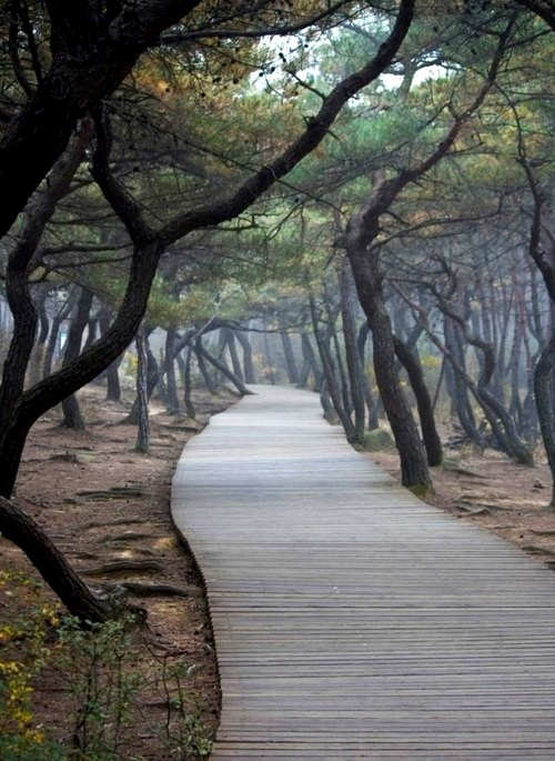 this is Korea, but it looks like South Carolina