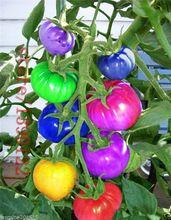 100 unids/bolsa rainbow semillas de tomate, raras semillas de tomate, vegetales orgánicos y semillas de frutas bonsai, plantas en maceta para el hogar y jardín(China (Mainland))