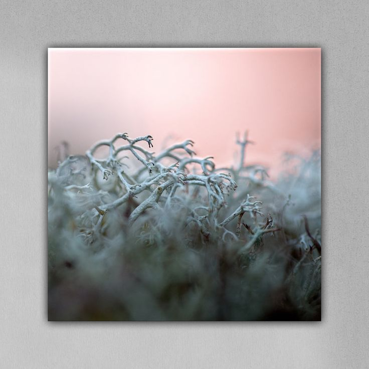 🎨 MOSS DANCERS OF THE ARCHIPELAGO SEA · 1st edition 30x30 cm Aluminum Resin Print BUY ONLINE