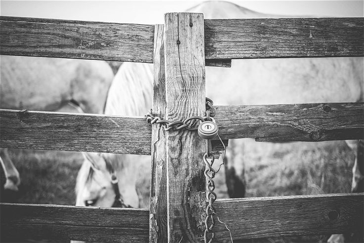Lock on the Door ➤ DOWNLOAD by click on the picture ➤ #Animals #Farm #Horses #Ranch #Lock #BlackAndWhite #Nature #freestockphotos #picjumbo