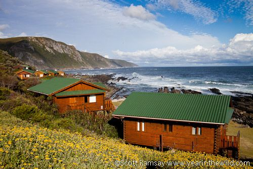 The chalets at Storms River Mouth in Tsitsikamma National Park offer a great alternative to the typical hotel room suite (Image: Scott Ramsay/ http://www.yearinthewild.com) #honeymoon #gardenroute