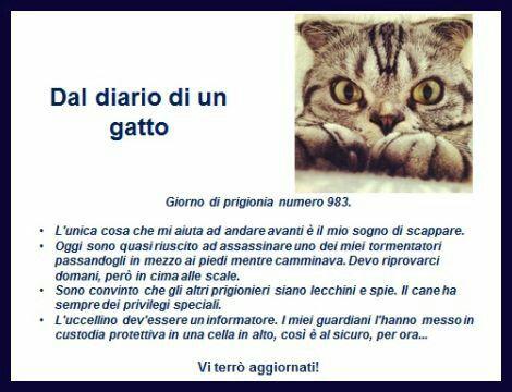 Il diario di un gatto
