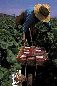 In The Strawberry Fields by Eric Schlosser - Migrant workers in California and the consequences of a deliberate low-wage economy.