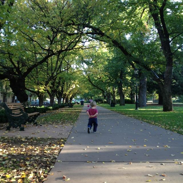 Rosalind Park Bendigo in Autumn