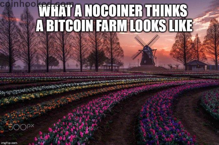 pellicola bitcoin)
