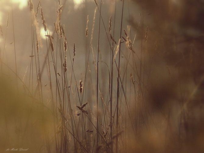 Światłem malowane - Galeria: Monika Górniak - Galeria zdjęć DigitalCamera Polska - fotografie, zdjęcia