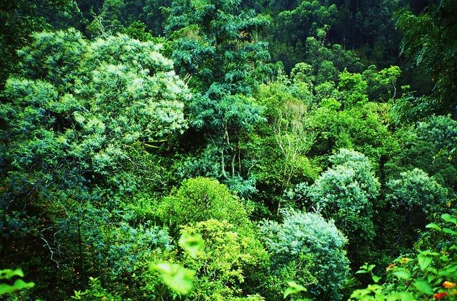 Réunion_1 by Archangem, via Flickr