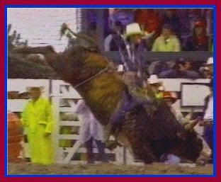 "Lane Frost's last ride on July 30, 1989 in Cheyenne, WY on the bull ""Taking Care of Business"""