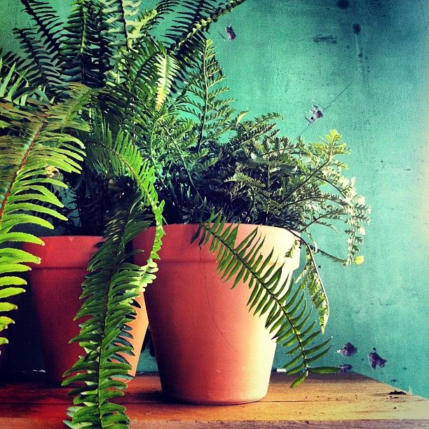 When in doubt, just put ferns in terra cotta pots in front of a distressed turquoise wall