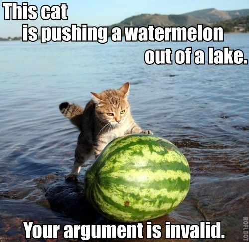 cat is pushing watermelon out of a lake. Invalid argument