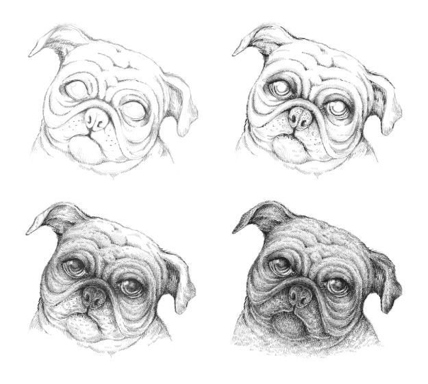 30 Ways To Draw Dogs Pugs Dog Drawing Tutorial Dogs