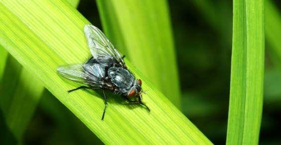 armadilhas para moscas