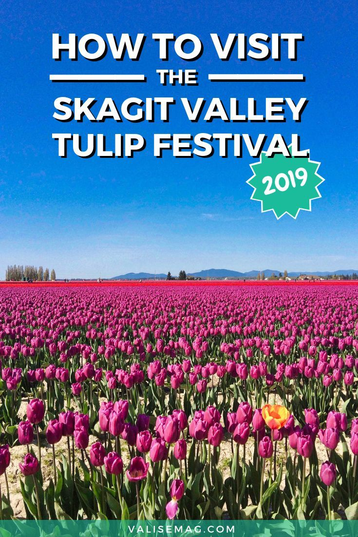 How To Visit The Skagit Valley Tulip Festival In 2020 Skagit Valley Tulip Festival Skagit Valley Tulip Festival