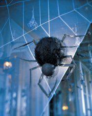 spider-web-1010sip1003.jpg