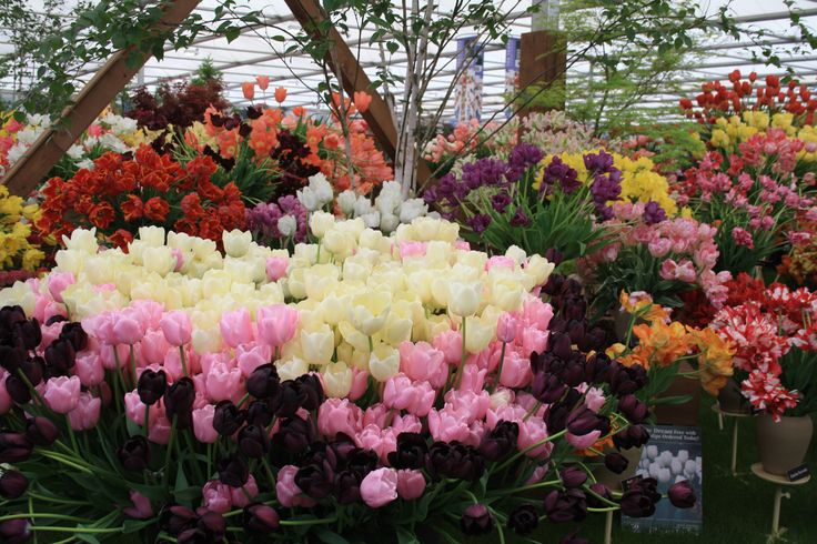 Tulips of every shape, size and colour at Chelsea Flower Show #gardenchat #springfloweringbulbs